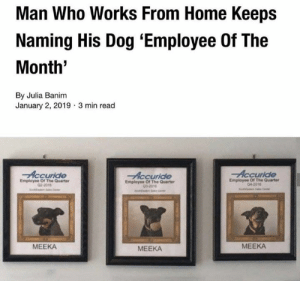 Memes, Home, and 🤖: Man Who Works From Home Keeps  Naming His Dog 'Employee Of The  Month'  By Julia Banim  January 2, 2019  3 min read  Accuride  Employee Of The Quarter  04-2016  Employee Of The Quarter  02-2016  Employee Of The Quarter  032016  MEEKA  MEEKA  MEEKA