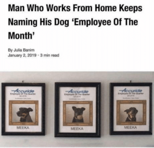 PAWesome job, dog.: Man Who Works From Home Keeps  Naming His Dog 'Employee Of The  Month'  By Julia Banim  January 2, 2019 3 min read  Accuride  Empicyse Of The Quaer  Accuride  Eny Of The  Accuride  Emiyes Of The arte  জ  MEEKA  MEEKA  MEEKA PAWesome job, dog.