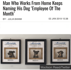 Good human.: Man Who Works From Home Keeps  Naming His Dog 'Employee Of The  Month'  02 JAN 2019 15:38  BY JULIA BANIM  Accuride  Accuride  Accuride  Employee Of The Quarter  04-2016  Employee Of The Quarter  Q2-2016  Employee Of The Quarter  Q3-2016  SouEaste Sales Center  SoueNEastem Sales Center  SouthEasm Sas Cente  МЕЕКА  МЕЕКА  МЕЕКА  Madison Reed/Twitter Good human.