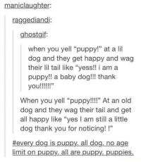 "Puppies, Thank You, and Happy: maniclaughter:  raggediandi:  ghostgif  when you yell ""puppy!"" at a lil  dog and they get happy and wag  their lil tail like ""yess!! i am a  puppy!! a baby dog!! thank  When you yell ""puppy!!!"" At an old  dog and they wag their tail and get  all happy like ""yes I am still a little  dog thank you for noticing! !""  #every dog is puppy, all dog, no age  limit on puppy. all are puppy._puppies."