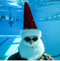 DIVING INTO THE HOLIDAYS: The 1st Marine Logistics Group at Camp Pendleton, California, got into the holiday spirit and dressed as Santa Claus as part of an underwater photoshoot to show off their photography skills and feature a water training exercise. For more on this, check out our Instagram Story!: Manne Corps photo by GySgt Ahlin) DIVING INTO THE HOLIDAYS: The 1st Marine Logistics Group at Camp Pendleton, California, got into the holiday spirit and dressed as Santa Claus as part of an underwater photoshoot to show off their photography skills and feature a water training exercise. For more on this, check out our Instagram Story!