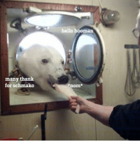 big shoob enter the airlock to receive space snacks: many thank  for schmalko  hello hooman  nom. big shoob enter the airlock to receive space snacks