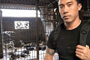 Dogs, Festival, and Dog: . Marc Ching, an activist against Yulin's annual dog eating festival, freed a total of 1,000 dogs ahead of the festival.