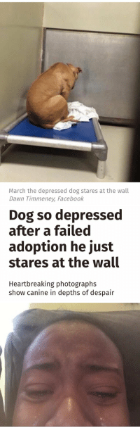 Dogs, Facebook, and Fail: March the depressed dog stares at the wall  Dawn Timmeney, Facebook   Dog so depressed  after a failed  adoption he just  stares at the wall  Heartbreaking photographs  show canine in depths of despair https://t.co/MiO7eg2UMs