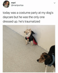 Dogs, Party, and Today: mari  @mariportsa  today was a costume party at my dog's  daycare but he was the only one  dressed up. he's traumatized but he looks amazing 😭