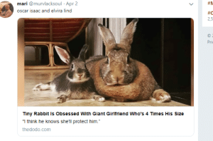 "mysharona1987:  She actually isn't.But she likes her high heels… : mari @murvlacksoul Apr 2  #N  oscar isaac and elvira lind  #C  2,5  Pri  Tiny Rabbit Is Obsessed With Giant Girlfriend Who's 4 Times His Size  ""I think he knows she'll protect him.""  thedodo.com mysharona1987:  She actually isn't.But she likes her high heels…"