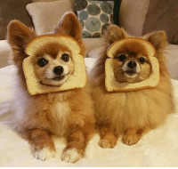 Marie Antoinette, French, and Bread: Marie Antoinette and Louis XVI mocking the starving French citizens begging for bread (1789, colorized).