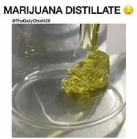 Here's a little Distillate pour to add to your WakeAndBake 😍 - Distillates CAN be one of the most potent and clean types of Concentrates available today. - If processed correctly... - (If you want more info on distillates check out the video post I made Feb 18, I go into deeper detail.) - If you're looking for more 🔥 to add to your wake and bake... - Make sure you check out my boy @cannabis, his page is LitAF 🔥 - 📷: @steel_rollin - @TheDailyChief420: MARIJUANA DISTILLATE  @TheDailyChief420 Here's a little Distillate pour to add to your WakeAndBake 😍 - Distillates CAN be one of the most potent and clean types of Concentrates available today. - If processed correctly... - (If you want more info on distillates check out the video post I made Feb 18, I go into deeper detail.) - If you're looking for more 🔥 to add to your wake and bake... - Make sure you check out my boy @cannabis, his page is LitAF 🔥 - 📷: @steel_rollin - @TheDailyChief420