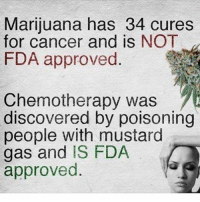 @marijuana.tv: Marijuana has 34 cures  for cancer and is NOT  FDA approved  Chemotherapy was  discovered by poisoning  people with mustard  gas and IS FDA @marijuana.tv