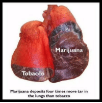 True, Marijuana, and Tobacco: Marijuana  TobaccO  Marijuana deposits four times more tar in  the lungs than tobacco Do y'all think this is true? 😳🤔 https://t.co/KU86SB6Jeg