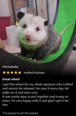 Wholesome review via /r/wholesomememes https://ift.tt/2MmN485: Marisabelle  Verified Purchase  Great wheel  I got this wheel for my rehab opossum who is blind  and cannot be released. He uses it every day. He  walks on it and even runs.  pretty easy to put together and is easy to  clean. I'm very happy with it and glad I got it for  It was  him.  714 people found this helpful Wholesome review via /r/wholesomememes https://ift.tt/2MmN485