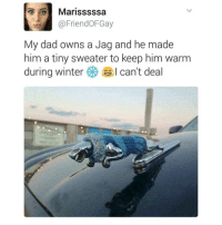 Memes, Winter, and 🤖: Marisssssa  @Friend OFGay  My dad owns a Jag and he made  him a tiny sweater to keep him warm  during winter  I can't deal 😂😂😂😂 (via Twitter: FriendOFGay)
