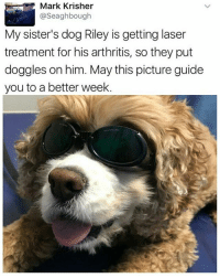 Memes, Arthritis, and Good: Mark Krisher  @Seaghbough  My sister's dog Riley is getting laser  treatment for his arthritis, so they put  doggles on him. May this picture guide  you to a better week. good boy, Riley stylin (follows appreciated @chaos.reigns_ 😎)