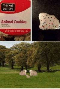 Cookies, Memes, and Target: market  pantry  Animal Cookies  White Fudge  NET WT 44 02 (2LB 120) 124g 30-minute-memes:And what majestic creatures they are