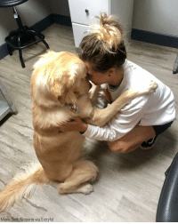 "Dogs, Memes, and Golden Retriever: Marki Beth Nieporte via Storyful After Crouton, a 10-month-old golden retriever, was quarantined at the vet's office due to illness, his owner gave him a pep talk to assure the pup that other dogs paws-itively ""DO wanna be his friend, he's just too sick to play with them right now."""