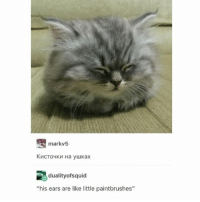 "Memes, 🤖, and Like: markv5  dualityofsquid  ""his ears are like little paintbrushes"" floof!!!!!! - Max textpost textposts"