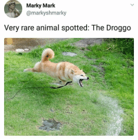 Much scare | Follow @aranjevi for more!: Marky Mark  @markyshmarky  Very rare animal spotted: The Droggo Much scare | Follow @aranjevi for more!