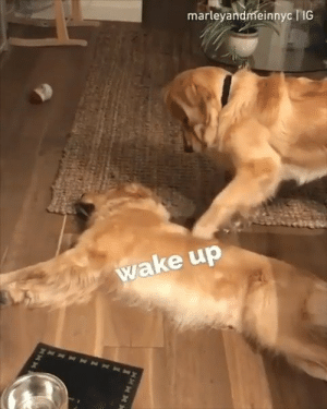 That friend who is always napping  By marleyandmeinnyc | IG: marleyandmeinnyc lIG  ake up That friend who is always napping  By marleyandmeinnyc | IG