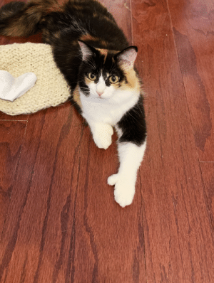 Her, Wanted, and Show: Marnie wanted to show everyone her polydactyl thumb