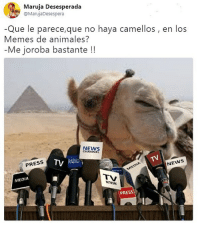 (By @maruja_desespera - www.twitter.com-marujadesespera) Cabroworld: Maruja Desesperada  @MarujaDesespera  Que le parece,que no haya camellos, en los  Memes de animales?  -Me joroba bastante!!  NEWS  CHANNEL  TV RADIO į  PRESS  NEWS  MEDIA  WETWORK  PRESS (By @maruja_desespera - www.twitter.com-marujadesespera) Cabroworld