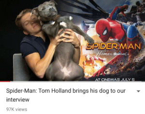 Spider, SpiderMan, and Tumblr: MARVEL STİİS  DERMAN  CINEMAS JULY 5  Spider-Man: Tom Holland brings his dog to our  interview  97K views crappytoilet:  me