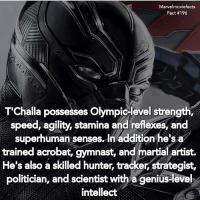 Facts, Memes, and Superhero: Marvelmoviefacts  Fact #196  T'Challa possesses Olympicelevel strength,  speed, agility, stamina and reflexes, and  superhuman senses. In addition he's a  trained acrobat, gymnast, and martial artist.  He's also a skilled hunter, tracker, strategist,  politician, and scientist with a genius-level  intellect Tag a friend! - - Follow @marvelmoviefact - Villains tonystark ironman marvel RDJ hulk avengers comics thor sciencebros marvelmovies blackwidow hawkeye captainamerica starkindustries steverogers teamstark teamcap robertdowneyjr geek superhero superheroes ironman1 ironman2 ironman3 gaurdiansofthegalaxy captainamericacivilwar civilwar marvelcomics marveluniverse