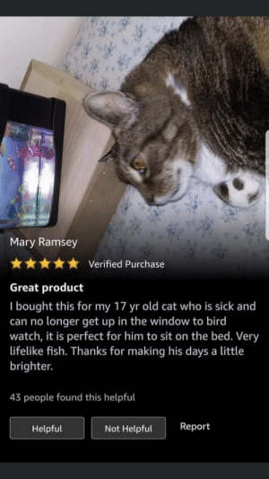 An elderly cat who can no longer bird watch receives a fish tank full of fake fish to watch from the comfort of his bed :): Mary Ramsey  Verified Purchase  Great product  I bought this for my 17 yr old cat who is sick and  can no longer get up in the window to bird  watch, it is perfect for him to sit on the bed. Very  lifelike fish. Thanks for making his days a little  brighter.  43 people found this helpful  Report  Not Helpful  Helpful An elderly cat who can no longer bird watch receives a fish tank full of fake fish to watch from the comfort of his bed :)