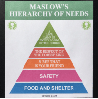 "<p>Maslow&rsquo;s hierarchy of needs may be the newest meme hit on the market! via /r/MemeEconomy <a href=""http://ift.tt/2CgFcwV"">http://ift.tt/2CgFcwV</a></p>: MASLOW'S  HIERARCHY OF NEEDS  LAVA  LAMP IN  EVERY ROOM  OF THE HOUSE  THE RESPECT OF  THE FOREST KING  A BEE THAT  IS YOUR FRIEND  SAFETY  FOOD AND SHELTER  obvious plant <p>Maslow&rsquo;s hierarchy of needs may be the newest meme hit on the market! via /r/MemeEconomy <a href=""http://ift.tt/2CgFcwV"">http://ift.tt/2CgFcwV</a></p>"