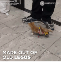 LEGO WHEELCHAIR 🐈 😍: Massapequa Pet Vet  Video by Dr Hilary Schilke  Care by Gabrielle Nania  MADE OUT OF  OLD LEGOS  HIGHER  PERSPECTIVE  CONNECT REVEAL TRAN LEGO WHEELCHAIR 🐈 😍