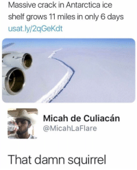 Memes, Squirrel, and Antarctica: Massive crack in Antarctica ice  shelf grows 11 miles in only 6 days  usat.ly/2qGeKdt  Micah de Culiacán  @MicahLaFlare  That damn squirrel Damn