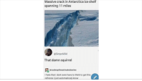 Squirrel, Antarctica, and Ice: Massive crack in Antarctica ice shelf  spanning 11 miles  @SimpnMild  That damn squirrel  broadwaytheanimatedseries  I hate that i dont even have to think to get this  refrence i just automaticaly know