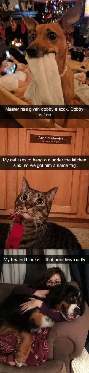 animalsnaps:More animal snaps: Master has given dobby a sock. Dobby  s free   Arnold Hewitt  Regional Manager  My cat likes to hang out under the kitchen  sink, so we got him a name tag   My heated blanket... that breathes loudly animalsnaps:More animal snaps