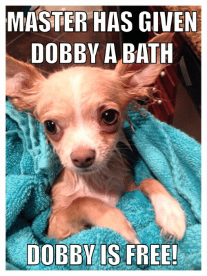 Given Dobby