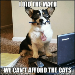 Animals, Cats, and Dogs: MATH  I DID THE  WE CAN T AFFORD THE CATS Dog Memes Of The Day 32 Pics – Ep33 #dogs #doglovers #lovelyanimalsworld - Lovely Animals World