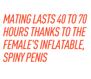 """thatssoproblematic:  pymparticles:  Scientists have discovered the animal kingdom first female penis. They have also discovered a new way to make me say """"Well, goddamn"""".  """"Contrary to popular belief, the presence or absence of certain sex organs isn't the determining factor when deciding which animal of a species is female and which is male."""" """"Contrary to popular belief, the presence or absence of certain sex organs isn't the determining factor when deciding which animal of a species is female and which is male."""" """"Contrary to popular belief, the presence or absence of certain sex organs isn't the determining factor when deciding which animal of a species is female and which is male."""" YO CISSEXISTS WHO LIKE SCIENCE SO MUCH. CHECK THIS OUT. : MATING LASTS40 TO 7  HOURS THANKS TO THE  FEMALE'S INFLATABLE  SPINY PENIS thatssoproblematic:  pymparticles:  Scientists have discovered the animal kingdom first female penis. They have also discovered a new way to make me say """"Well, goddamn"""".  """"Contrary to popular belief, the presence or absence of certain sex organs isn't the determining factor when deciding which animal of a species is female and which is male."""" """"Contrary to popular belief, the presence or absence of certain sex organs isn't the determining factor when deciding which animal of a species is female and which is male."""" """"Contrary to popular belief, the presence or absence of certain sex organs isn't the determining factor when deciding which animal of a species is female and which is male."""" YO CISSEXISTS WHO LIKE SCIENCE SO MUCH. CHECK THIS OUT."""