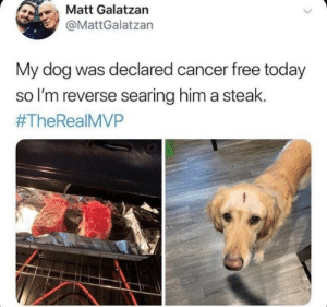 Funny, Cancer, and Free: Matt Galatzan  @MattGalatzan  My dog was declared cancer free today  so I'm reverse searing him a steak.  Congrats and good on you. Who is a good boy? You are a good boy. https://t.co/N7NjuQDzMZ