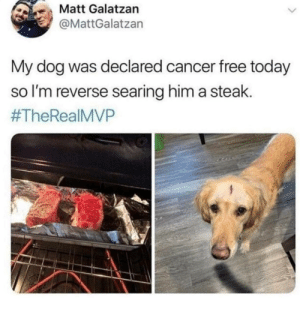 My faith is restored! via /r/wholesomememes https://ift.tt/30YuG8I: Matt Galatzan  @MattGalatzan  My dog was declared cancer free today  so I'm reverse searing him a steak.  My faith is restored! via /r/wholesomememes https://ift.tt/30YuG8I