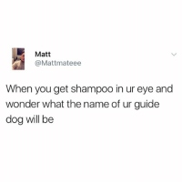 Memes, What Is, and Wonder: Matt  @Mattmateee  When you get shampoo in ur eye and  wonder what the name of ur guide  dog will be If you aren't following @madeinpoortaste then honestly what is the point
