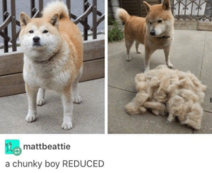 Memes, Boy, and Via: mattbeattie  a chunky boy REDUCED reduced via /r/memes https://ift.tt/2YXttRK