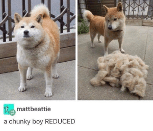 Memes, Boy, and 🤖: mattbeattie  a chunky boy REDUCED Still fluffy just less chonky