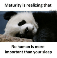 Tag friends 😂😂😂 Check out all of my prior posts⤵🔝 Positiveresult positive positivequotes positivity life motivation motivational love lovequotes relationship lover hug heart quotes positivequote positivevibes kiss king soulmate girl boy friendship dream adore inspire inspiration couplegoals sleep: Maturity is realizing that  positiveresult  No human is more  important than your sleep Tag friends 😂😂😂 Check out all of my prior posts⤵🔝 Positiveresult positive positivequotes positivity life motivation motivational love lovequotes relationship lover hug heart quotes positivequote positivevibes kiss king soulmate girl boy friendship dream adore inspire inspiration couplegoals sleep