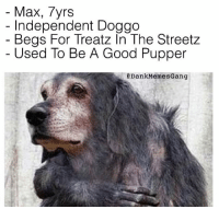 IG: Dankmemesgang: Max, 7yrs  Independent Doggo  Begs For Treatz In The Streetz  Used To Be A Good Pupper  a Dank Memes Gang IG: Dankmemesgang