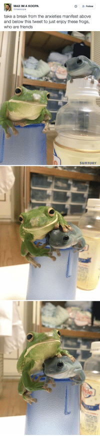 """Friends, Target, and Tumblr: MAX IM A KOOPA  @meakoopa  Follow  take a break from the anxieties manifest above  and below this tweet to just enjoy these frogs,  who are friends   sunTORY <p><a class=""""tumblr_blog"""" href=""""http://the-dodo.tumblr.com/post/151437752570"""" target=""""_blank"""">the-dodo</a>:</p><blockquote> <p><a href=""""https://twitter.com/meakoopa/status/783709076182167552"""" target=""""_blank"""">ribbit.</a></p> </blockquote>"""