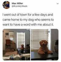 Disappointed, Home, and Word: Max Miller  @RuinMyWeek  I went out of town for a few days and  came home to my dog who seems to  want to have a word with me about it. His dog is not mad, just very disappointed
