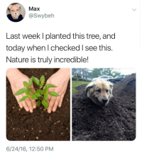 "Good, Nature, and Today: Max  @Swybeh  Last week I planted this tree, and  today when l checked I see this.  Nature is truly incredible!  6/24/16, 12:50 PM <p>Good Boy via /r/wholesomememes <a href=""https://ift.tt/2NIW2Ko"">https://ift.tt/2NIW2Ko</a></p>"