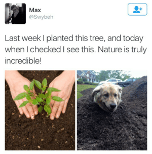 twitterlols: dogwood is really blooming this year: Max  @Swybeh  Last week I planted this tree, and today  when I checked I see this. Nature is truly  incredible! twitterlols: dogwood is really blooming this year