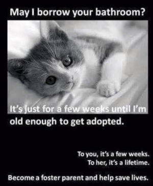 Memes, Help, and Lifetime: May I borrow your bathroom?  It's just for a few weeks until I'm  old enough to get adopted.  To you, it's a few weeks.  To her, it's a lifetime.  Become a foster parent and help save lives