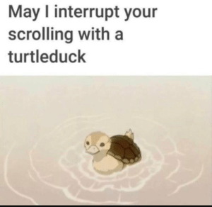 Today, Conservative, and Hell: May I interrupt your  scrolling with a  turtleduck I have a orchestra concert today and I'm excited as hell cause I get to wear a button up and tie and I pass really well! Kinda scared cause my mom is going to be there and she's pretty conservative (picture not related)