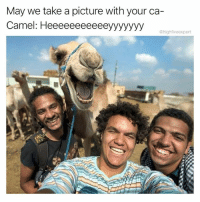 Meme, Memes, and A Picture: May we take a picture with your ca-  Camel: Heeeeeeeeeeeyyyyyyy  @highfiveexpert @thefunnyintrovert should be in the meme hall of fame!