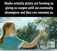 Memes, Oxygen, and Farming: Maybe actually plants are farming us  giving us oxygen until we eventually  decompose and they can consume us.